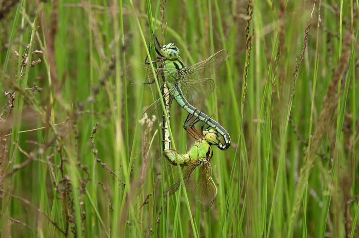 dragonfly3.jpg